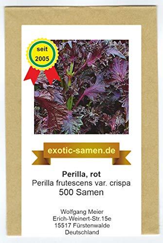 Perilla rot - Asia Gewürz - Perilla frutescens var. crispa - 500 Samen