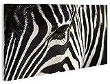 islandburner Bild Bilder auf Leinwand Zebra V2-1p XXL Poster Leinwandbild Wandbild Dekoartikel Wohnzimmer Marke