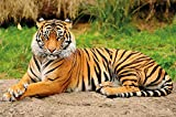 Papel pintado fotográfico que muestra un tigre ? fotomural de un tigre majestuoso ideal para el salón by GREAT ART (210 x 140 cm)
