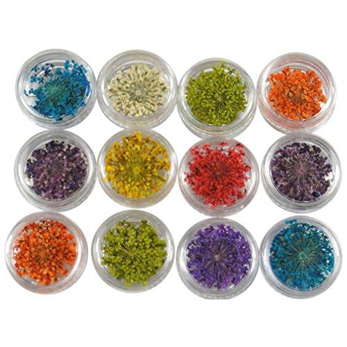 Longra 12 couleurs Décoration 3D Fleur sèche séchée Pour UV Gel Acrylique Conseils d'art des ongles Autocollant de Transfert des Ongles Autocollants de à eau pour la décoration (Multicolore)