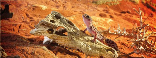 Exo Terra Krokodilschädel - 2