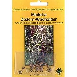 Bonsai - 15 Samen v. Juniperus cedrus, Madeira Zedern-Wacholder, 90052