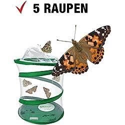 Hagemann Zuchtset Schmetterlinge