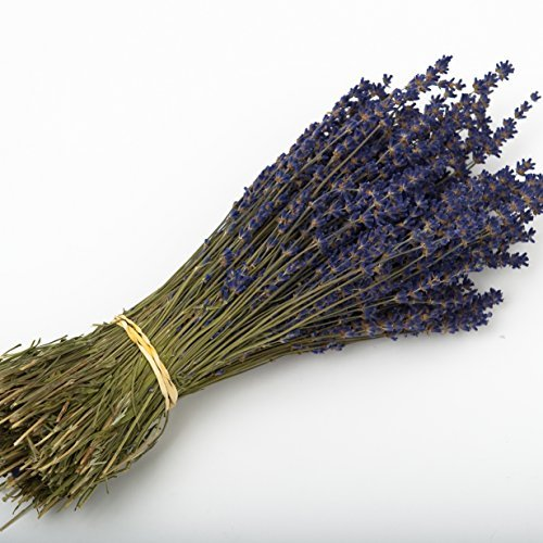 (Lavender Bunch 250 Dried Flower Stems Wedding, decoration, gift by Shropshire Petals)