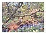 Forêt de Jacinthe des Bois (Bluebell Wood) - Puzzle de 500 Pièces