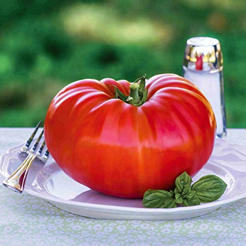 AIMADO Samen-Bio 50 Pcs Veredelte Fleisch-Tomate F1 Saatgut Tomatensamen, die größte Tomate der Welt,Stab-Tomate für Garten und Gewächshaus,Mit unvergleichlichem Aroma