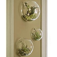 Juego de 3 jarrones de vidrio de pared, terrarios de pared de burbujas, terrarios