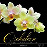 Orchideen 2018 - Blumen - Bildkalender (33 x 33) - mit Texten: by Rainer Haak