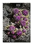 Schlussverkauf! 50 PC Seltene Kakteensamen Sukkulenten Mini Garten Pflanzen, Edible Beauty Obst Vegeable Samen Kräuter Gesunde Pflanze 12