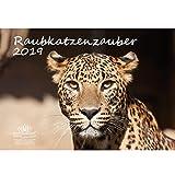 Raubkatzenzauber · DIN A3 · Premium Kalender 2019 · Raubkatze · Tiger · Löwe · Panther · Puma · Gepard · Afrika · Tiere · Wildnis · Natur · Edition Seelenzauber
