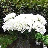 Springdoit Schal Hortensie, künstliche Blume Dekoration Blume, 3 kleine Blütenköpfe, Hochzeitsdekoration Wand Blume (weiß)