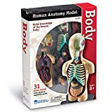 Learning Resources Anatomy Model - Human Body