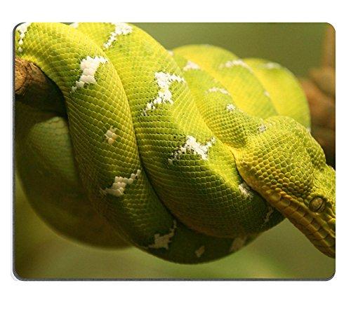 MSD-Tappetino per mouse in gomma naturale, gioco ID 306804 immagine: serpente su un ramo