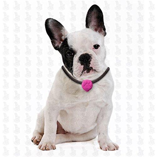 6 Stück Hunde Leuchtanhänger Leuchthalsband Led Hundehalsband LH10 Blinkie von Leuchthund® Led Anhänger (6 Stück gemischt – 1 je Farbe) - 4