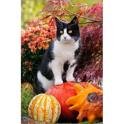 Stampa su legno 20 x 30 cm: Tuxedo cat on