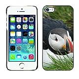 Hülle Case Schutzhülle Cover Premium Case // F00011322 Island Puffin // Apple iPhone 5 5S 5G