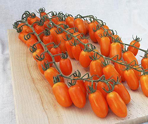 Bobby-Seeds Tomatensamen Tomate Odat F1 Portion