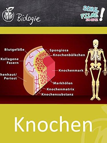 Knochen - Schulfilm Biologie Knochen-gewebe