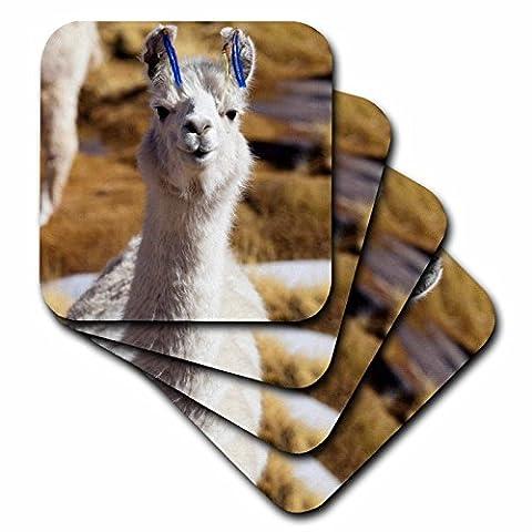 3dRose cst_85310_2 Argentina, Santa Rosa De Los Pastos Grandes, Llama Sa01 Jri0222 Jutta Riegel Soft Coasters, (Set of 8)