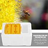 Ernte Bee Hive Box Bienenzucht King Bestäubung Werkzeug Auto Honig Beehive Rahmen Kit Raw Ernte