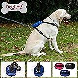 Best Front Range No-pull Dog Harnesses - CloudRetail 1Pc Black, S:Nylon Front Range No-Pull Dog Review