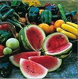 Gemüse Kings Seeds Bild Paket Wasser Melone Sugar Baby 20 Samen