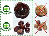 Greenwill Soapberry / Soap Nuts - 5 Poun...