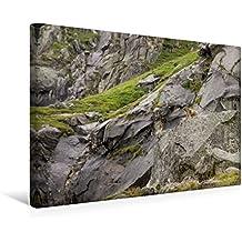 Calvendo Premium Textil-Leinwand 45 cm x 30 cm Quer, Nationalparkbewohner | Wandbild, Bild auf Keilrahmen, Fertigbild auf Echter Leinwand, Leinwanddruck Orte Orte