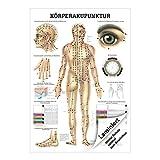 Körperakupunktur Lehrtafel Anatomie 100x70 cm medizinische Lehrmittel