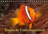 Tropische Unterwasserwelt (Tischkalender 2019 DIN A5 quer): Tropische Fische in faszinierenden Unterwasserfotos (Monatskalender, 14 Seiten ) (CALVENDO Tiere)