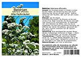 Seedeo Baldrian (Valeriana officinalis) 200 Samen