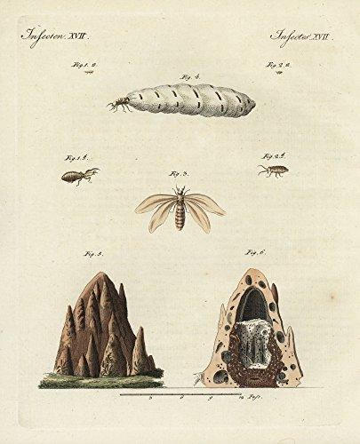r-florilegius-mary-evans-termites-and-mound-kunstdruck-6096-x-9144-cm
