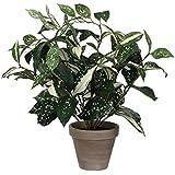 Vert MICA Decorations 930307/Ficus Natasja dans Pot Stan 30/x 30/x 40/cm Polyester