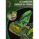 Le Caméléon Casqué du Yémen: Chamaeleo Calyptratus