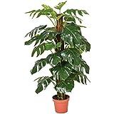 Catral 74010020 Planta artificial Monstera, 22.0x22.0x135.0 cm