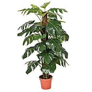 Catral 74010020 Planta artificial Monstera, 22.0×22.0x145.0 cm