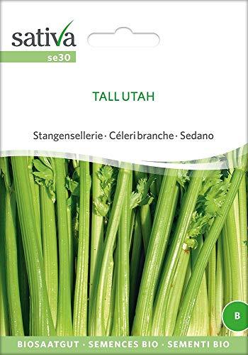 Stangensellerie Tall Utah   Bio-Selleriesamen