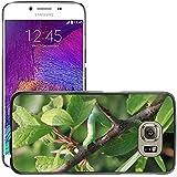 Just carcasa Hot carcasa rígida de estilo teléfono celular PC//m00139190Blade Caterpillar pequeña/Hierba/Samsung Galaxy S6(no para S6edge)