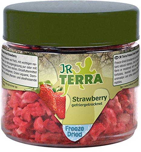 JR Farm 10822 Terra Freeze Dried Strawberry Erdbeere, 10 g - Jr-erdbeere