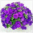 JJ.Accessory Semillas de flores perennes en maceta para bricolaje, decoración del hogar, jardín, escritorio, 50 unidades