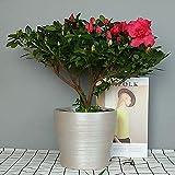 Better-way Runde Schale Vase Keramik Pflanztopf 12,7 cm Fensterbank-Dekoration Orchideen-Blumen-Container Geschenk für Weihnachten Urlaub, keramik, Metallic Sliver Tone, D:5inch*H: 4.7inch