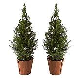 BOTANICLY | Weihnachtsbaum | Zuckerhutfichte in Naturholz Topf mit silberner Dekoration | 65 cm | Set aus 2 Weihnachtsbäumen
