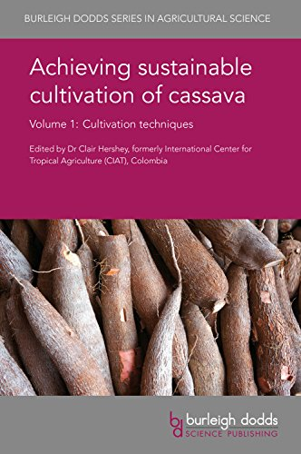achieving-sustainable-cultivation-of-cassava-cultivation-techniques
