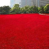 Mymotto Semi d'erba rari colorati, per giardino, campi da calcio all'aperto