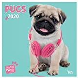 Pugs 2020 Mini Wall Calendar (Studio Pets)