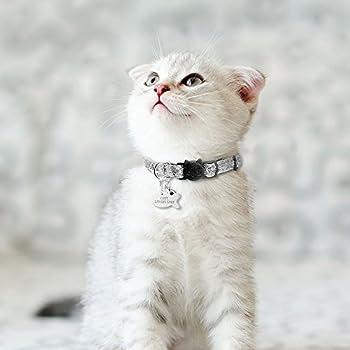 Didog Collier brillant pour chaton Boucle de sécurité Plaque d'identification gravée en forme de poisson