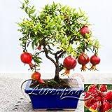 20 semi di melograno bonsai molto dolce Delicious semi di frutta paesaggistica commestibile Mangia il tuo bel semi Yard albero