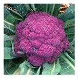 Blumenkohl - Di Sicilia Violetto - ca. 100 Samen