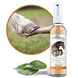 Ida Plus - Mauke Spray für Pferde 200ml - Mauke Mittel zur einfachen & schmerzfreien Haut- & Hufpflege - Reinigung von Fesselekzem beim Pferd - schnell & zuverlässig - hautfreundlich & regenerierend