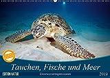 Tauchen, Fische und Meer (Wandkalender 2019 DIN A2 quer): Unterwasserimpressionen (Monatskalender, 14 Seiten ) (CALVENDO Tiere)
